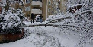 Site kapısına devrilen ağaç site sakinlerini mahsur bıraktı