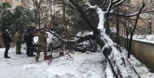 Ataşehir'de 30 yıllık tesbih ağacı park halindeki otomobillerin üzerine devrildi