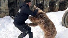 Karın keyfini çıkaran ayı, bakıcısıyla güreş tuttu