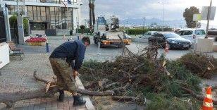 İzmir'de fırtınadan 330 ağaç zarar gördü