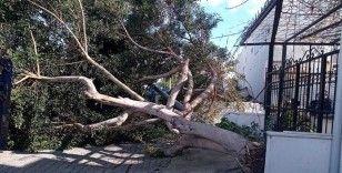 Muğla'da kuvvetli fırtına ağaçları devirdi