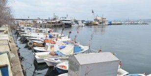 Marmara'da balıkçıların korkulu rüyası 10 yıl sonra geri döndü