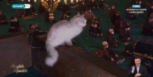 Ankara kedisi 'Kılıç' Ayasofya'da kandil gecesi ilgi odağı haline geldi