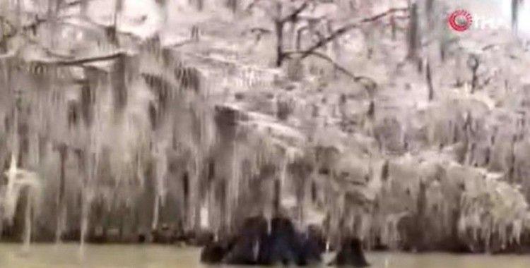 ABD'de göldeki ağaçlar dondu