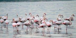 İzmit Körfezi göçmen kuşların uğrak noktası oldu