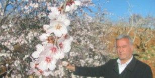 Erken çiçek açan bademler üreticiyi telaşlandırdı