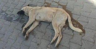 10 köpeği zehirleyerek öldüren adama para cezası