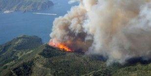 Japonya'da devam eden orman yangınında 100 hektarlık alan küle döndü