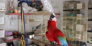 Bu papağan insan gibi su içiyor, müzik duyunca oynuyor