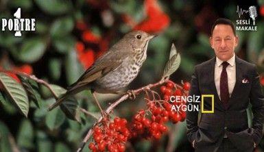 Ardıç ağacıyla Ardıç kuşunun ilişkisi nedir; Bilir misiniz?..