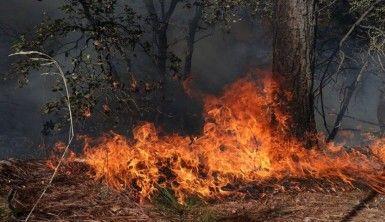 Meksika'da devam eden orman yangınları 7 bin hektarlık alanı küle çevirdi