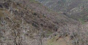 Dağ keçileri sınır bölgesinde sürü halinde görüntülendi