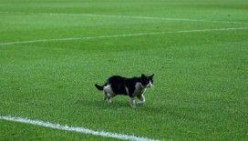 Kadıköy'de sahaya kedi girdi