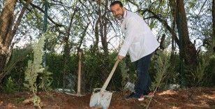 Göbek bağları hastane bahçesine gömüldü