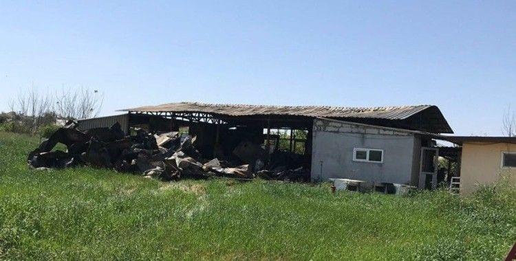Antalya'da çekirge üretim merkezinde yangın: Anaç böceklerin tamamı yandı