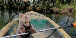 Böyle tatlı ayı görmediniz