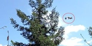 Gümüşhane'de ağaçtan ağaca uçan sincap cep telefonu kameralarına takıldı