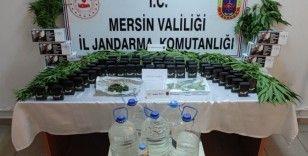 Mersin'de 85 kök kenevir bitkisi ele geçirildi