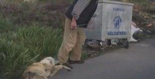 Sarıyer'de bağladığı köpeği sürükleyerek çöpe atan şahıs yakalandı