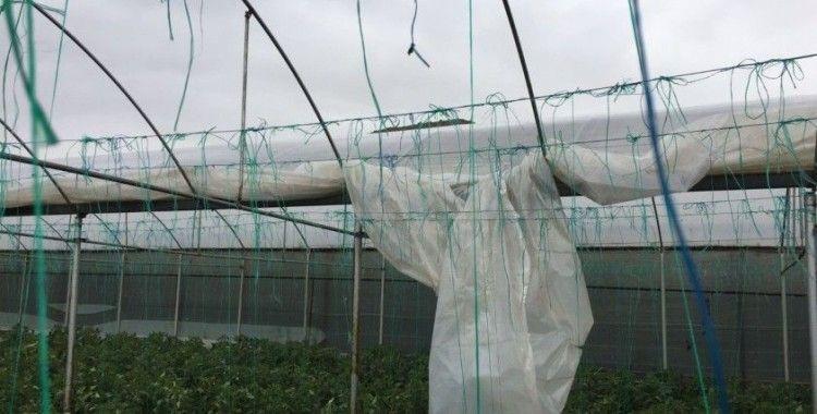 Amasya'da fırtına: Sera örtüleri uçtu
