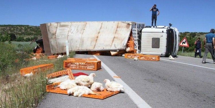 Canlı tavuk yüklü tır devrildi, yüzlerce tavuk telef oldu
