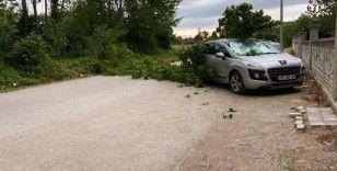 Sağanak yağış sonrasında aracın üzerine ağaç devrildi
