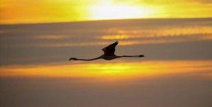 İzmir Kuş Cenneti gün batımında flamingolarla ayrı güzelliğe bürünüyor