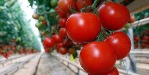 Rusya'nın domates ithalat kotasını artırması sektör temsilcilerini sevindirdi
