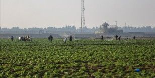 Gazze'deki Tarım Bakanlığı sebze ihracatını engelleyen İsrail'den meyve alımını durdurdu