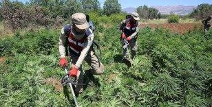 Diyarbakır'daki narko-terör operasyonunda 7 milyon 233 bin 602 kök kenevir, 32 kilogram esrar ele geçirildi
