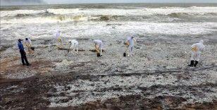 Sri Lanka kimyasal madde taşıyan geminin batmasının ardından çevre felaketiyle karşı karşıya