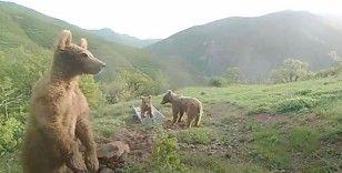 Bakan Pakdemirli'den su yalağında oynayan ayılarla ilgili 'Halinden memnun' paylaşımı