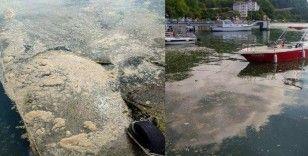Deniz salyası Karadeniz'de