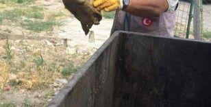 Çöpe atılan kaplumbağayı temizlik görevlileri kurtardı