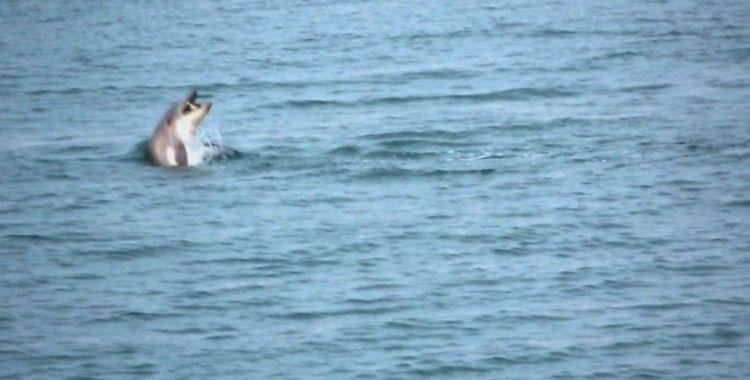Karadeniz'de yunus şöleni