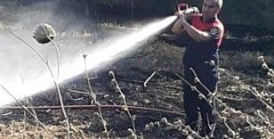 Ateş savaşçılarının hızlı müdahalesi, zeytin ağaçlarını korudu
