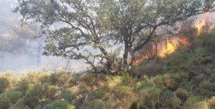 Fethiye'deki orman yangını büyümeden söndürüldü