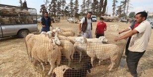 Arap ülkelerinden 17'si Kurban Bayramı'nı 20 Temmuz'da kutlayacak