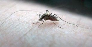 İstanbul'da sivrisinek ısırıklarına bağlı hasta şikayetleri arttı