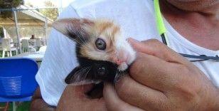 Türkiye'nin ilk çift yüzlü kedisi gönülleri fethetti