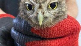 Havalandırma boşluğuna düşen baykuş itfaiye ekiplerince kurtarıldı