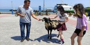 Koyunların efendisi