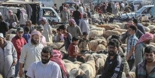 İdlib'de yerlerinden edilen siviller yoksulluk ve pahalılığın gölgesinde Kurban Bayramı'na giriyor
