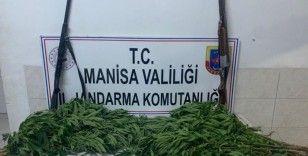 Manisa'da jandarmadan kenevir operasyonu