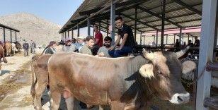Kurban satışları hayvan üreticilerinin yüzünü güldürüyor