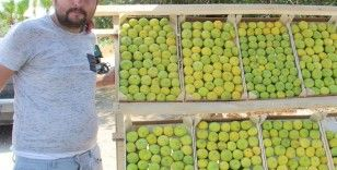 Aydın'ın milli meyvesi incir tezgahlarda yerini aldı