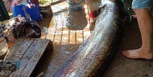 Oltayla 70 kiloluk yayın balığı yakaladı