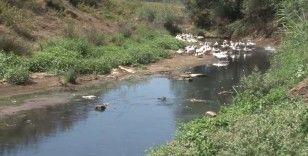 Alibeyköy Barajına akan dere korkuttu