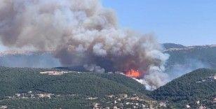 Lübnan'da korkutan orman yangını