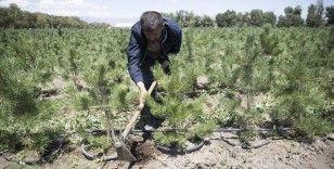 Doğu Anadolu'nun kıraç toprakları ve yanan ormanları yetiştirilen fidanlarla yeniden yeşeriyor
